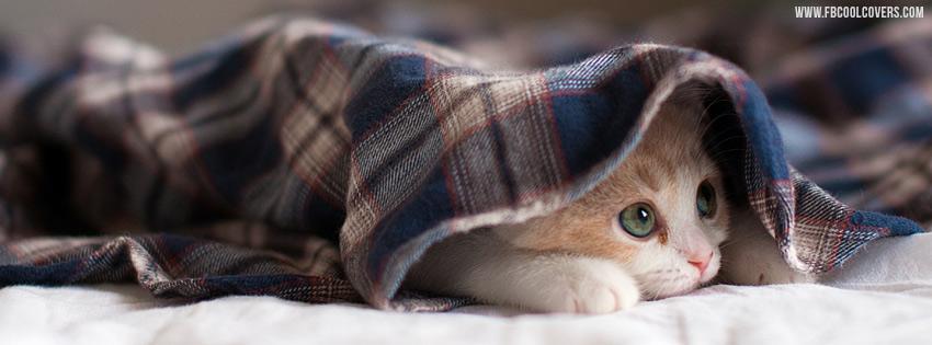 Cute Cat In Quilt