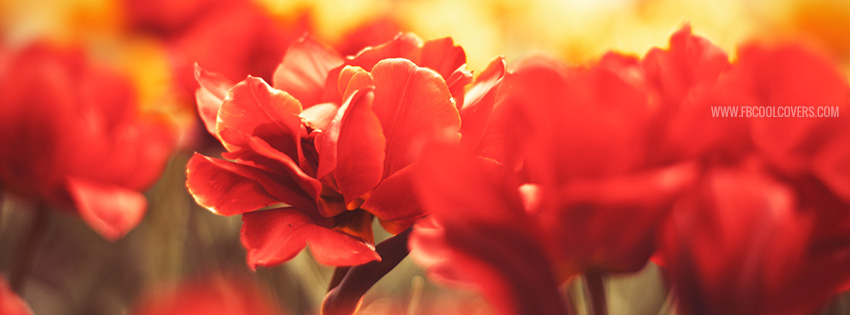 Beautiful Red Flowers Facebook Covers