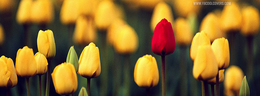 Red Yellow Tulips Facebook Cover