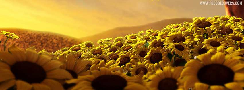 Sunflower Cover Photos